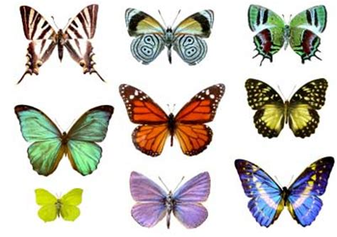 of a butterfly iridescence in butterfly wings howstuffworks