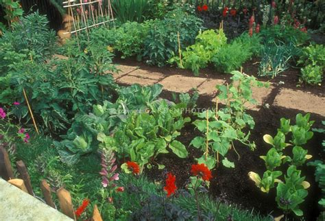 flowers to plant in vegetable garden eat live grow paleo the vegetable garden