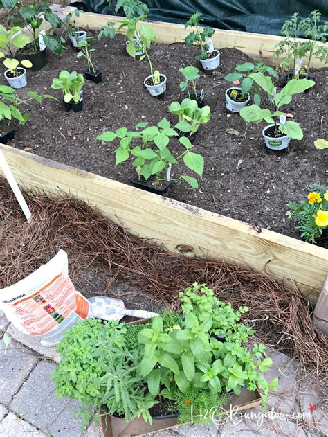 tips for planting a vegetable garden how to build a raised vegetable garden bed h20bungalow