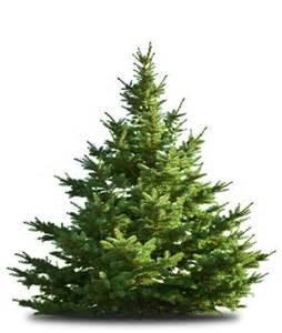 toom weihnachtsbaum der gro 223 e toom weihnachtsbaumverkauf