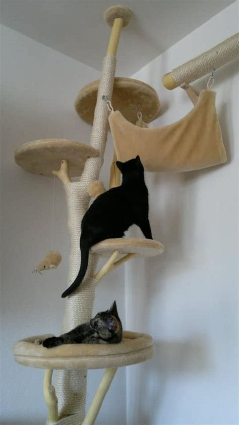 cats real trees cat tree from real branches diy
