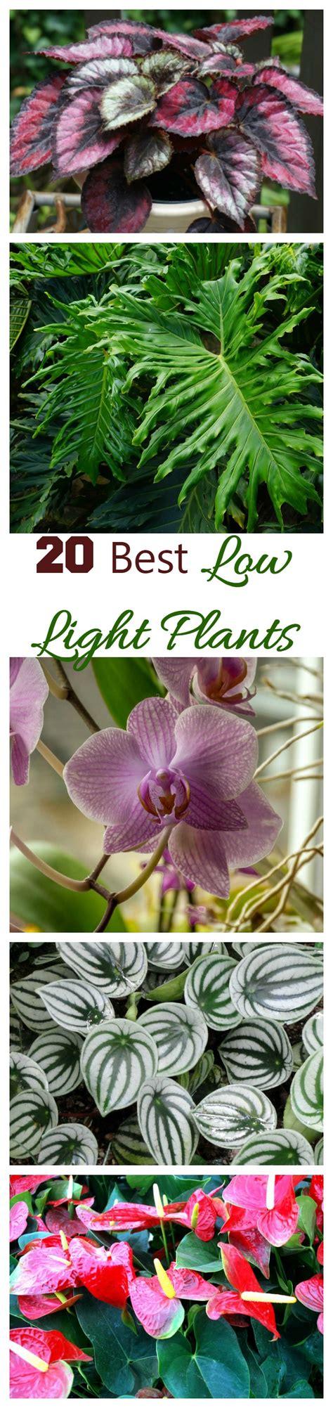 best plants to grow indoors in low light low light indoor plants my 20 favorite house plants