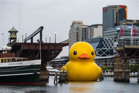 craft rubber sts australia rubber duck spotted in harbour as part of