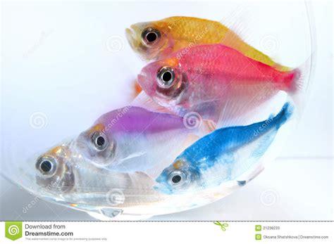 poissons d aquarium photos stock image 21238233