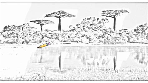 Auto Draw Com auto draw 2 baobab trees reflected in wetlands morondava