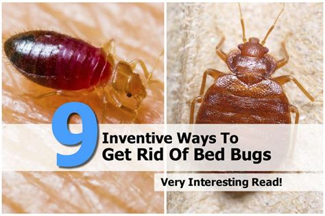 Get Rid Of Bed Bugs Fast by A Guide To Bed Bugs Bed Bugs Html Autos Post