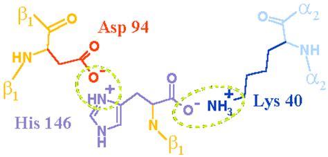 cadenas queratinicas puente salino en la desoxihemoglobina