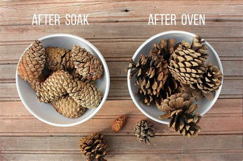 how to preserve pinecones how to pine cones for crafts brown hairs