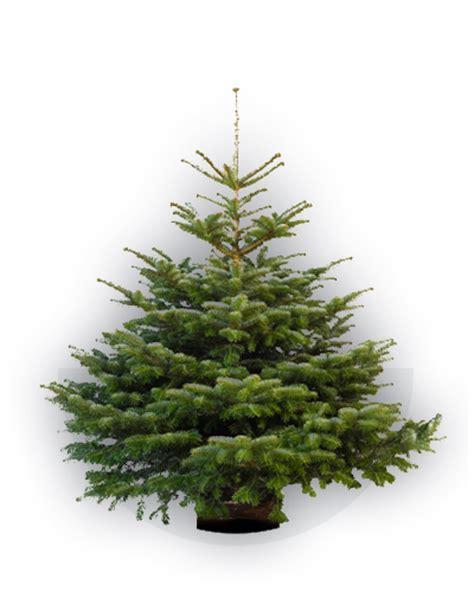 greencap kerstbomen
