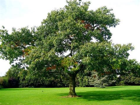 all tree what your favorite tree really says about you