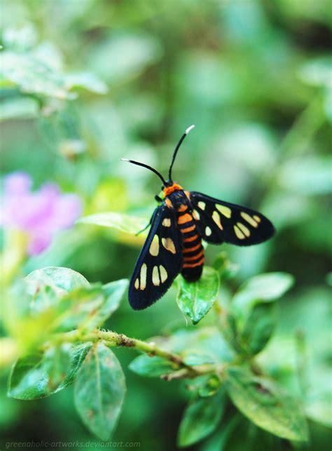 kupu kupu kupu kupu kecil by greenaholic artworks on deviantart