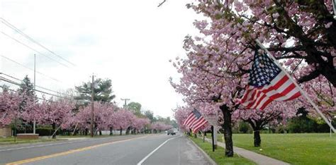 6 cherry tree cherry hill nj chapel avenue cherry hill nj foto di cherry hill new jersey tripadvisor