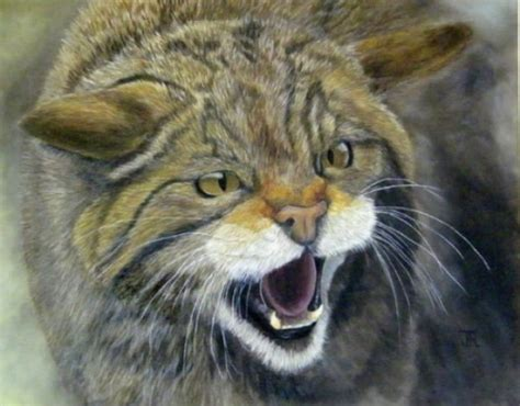 bob ross painting wildlife wildlife jess rogerson bob ross painting classes in