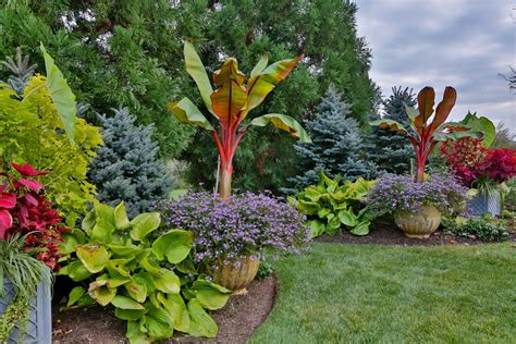 tropical landscaping ideas tropical landscaping ideas
