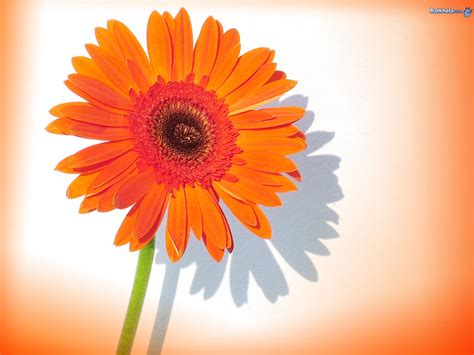 flower images vibrant flowers wallpaper 248115 fanpop