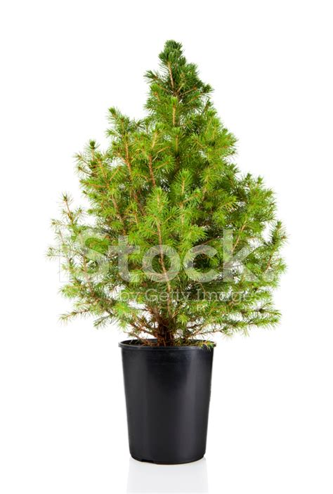 potted tree potted tree stock photos freeimages