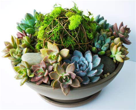 large succulent planter the best 28 images of large succulent planter large