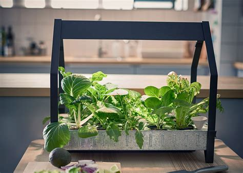 hydroponic vegetable garden kit hydroponic gardening made simple by ikea