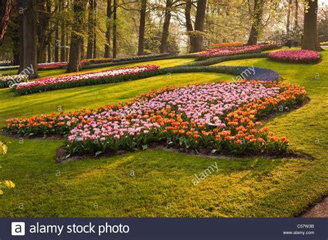 netherlands flower garden pink tulips in keukenhof flower garden netherlands stock