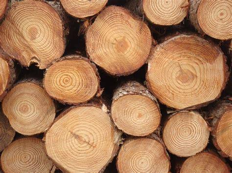 woodworking logs pine wood logs pine wood logs pine wooden logs exporters