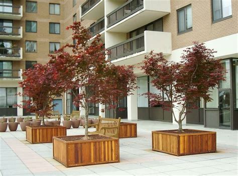large planters for trees 33 best images about wood planter tree box on