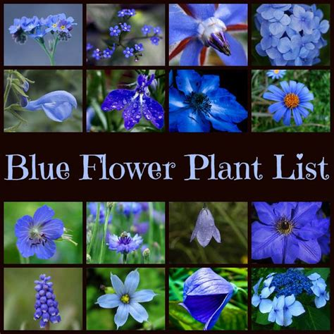 list of garden flowers with pictures 25 best ideas about blue garden on blue