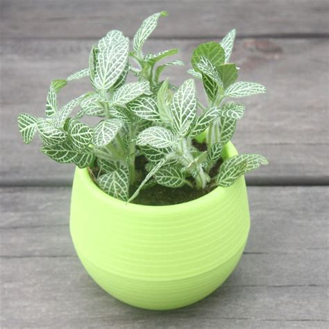 get cheap plastic pot planters aliexpress