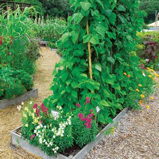 flowers to plant in vegetable garden wise pairings best flowers to plant with vegetables