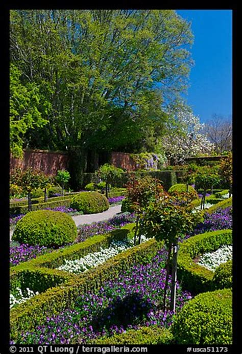 woodside walled garden picture photo hedges and flowers walled garden filoli
