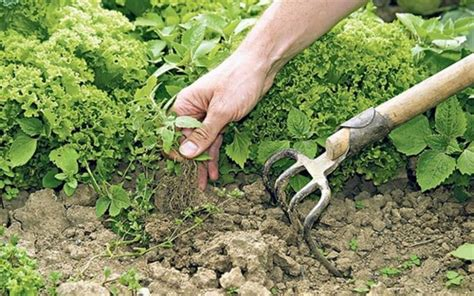 10 non toxic ways to control weeds small footprint family