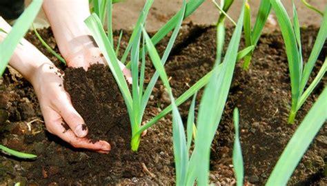 Garten Pflanzen Womit Düngen by D 252 Ngen Im Fr 252 Hjahr Wann Und Mit Welchem D 252 Nger Es Ratsam Ist