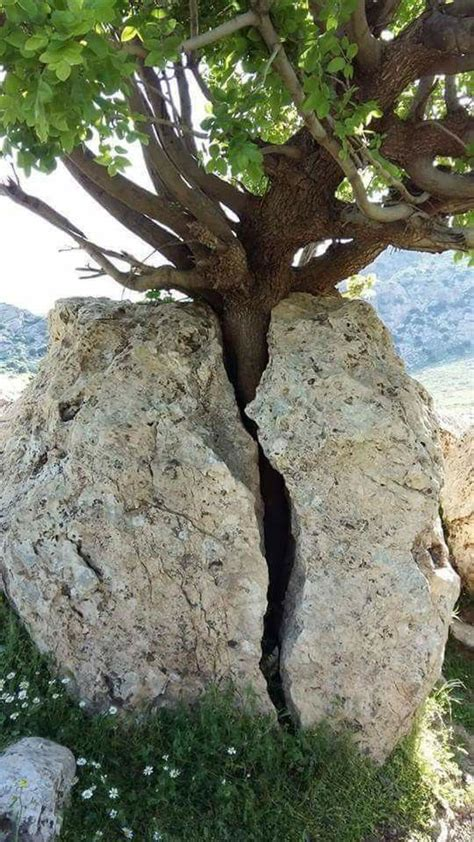 rock the tree trees rocks and nature on
