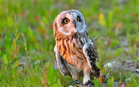 Bath Room Designs photo collection download wallpaper owl bird