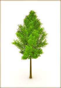 tree pic earth day trees or a single tree corner 3d