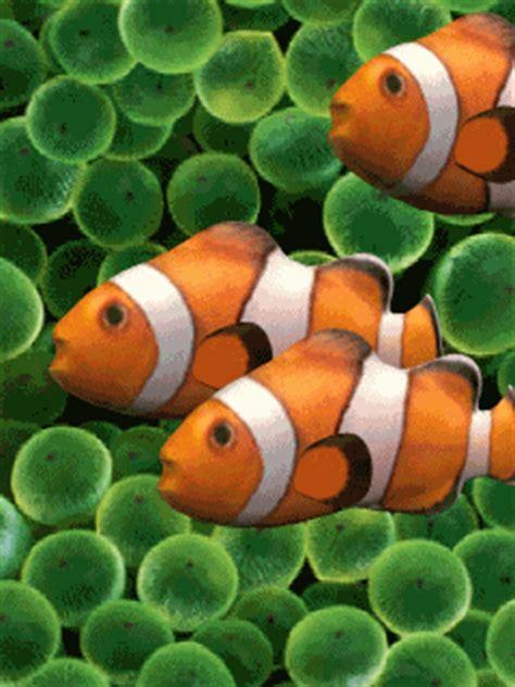 clownfish.gif