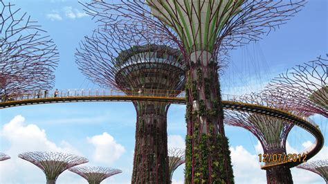 singapore tree singapore tree 就要健康网