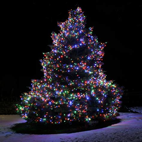 lights on outside trees 10 things to consider before installing lights
