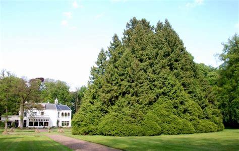 Der Garten Des Riesen by Riesen Lebensbaum Im Garten Des Landgoed Het Stroot In