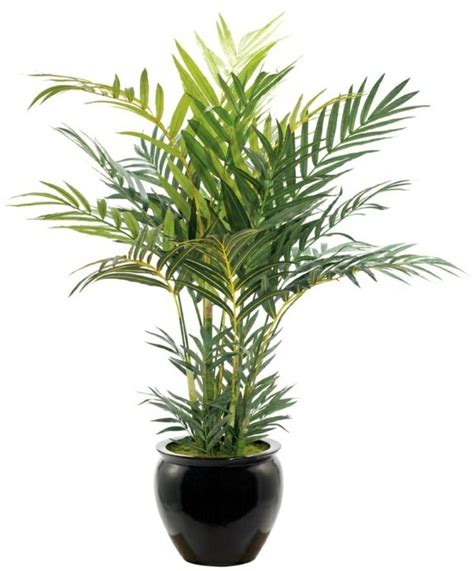 indoor palm indoor palm images which are the typical types of palm