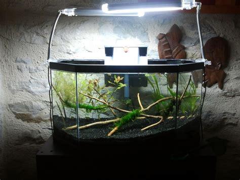 aquarium 50 litres sp 233 cial crevettes