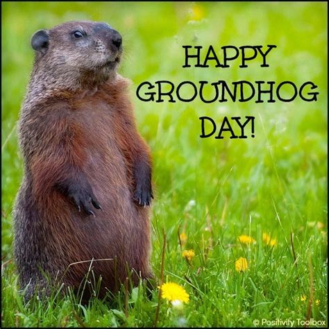 groundhog day meaning in groundhog day
