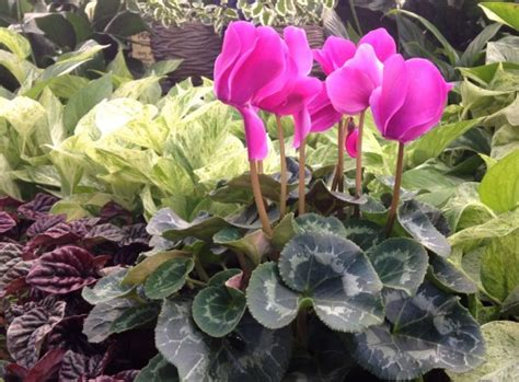 low light indoor flowers gardening indoor tropical plants for winter carycitizen