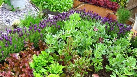 self sufficient vegetable garden 10 tips to starting a vegetable garden for beginners the