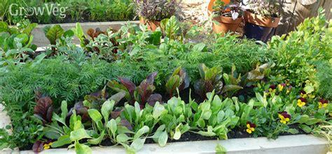 growing vegetable garden crop rotation for growing vegetables