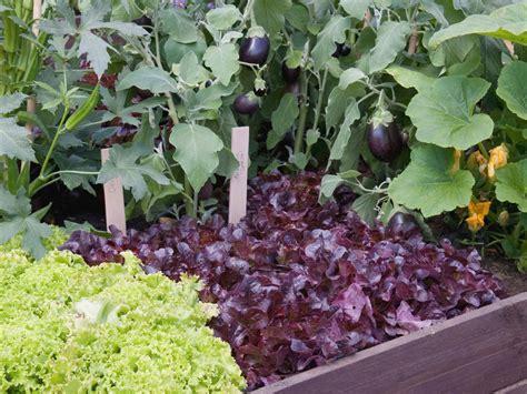 my vegetable garden should i plant my vegetable garden in raised beds hgtv