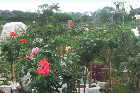 flower garden hanoi flower garden hanoi flower garden hanoi hotel hanoi
