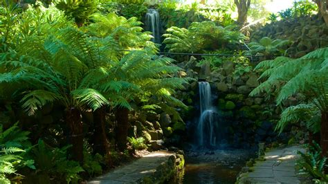 royal botanic gardens melbourne royal botanic gardens melbourne attraction