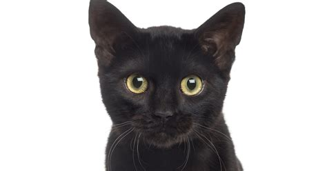 black cat stop hating on black cats it s national black cat day