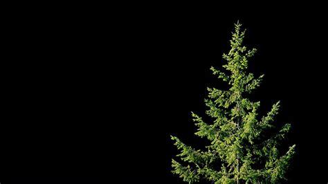 tree on black background tree in on black background by rockfordmedia