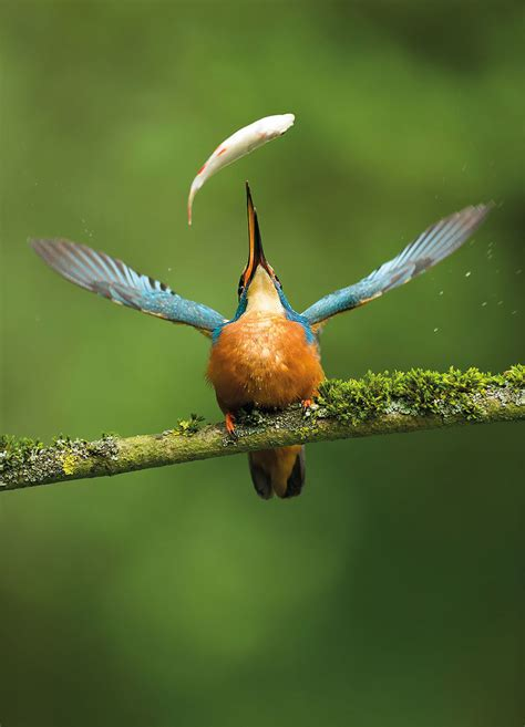 best of the year 55 most amazing photos from bird photographer of the year